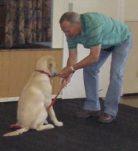 Dog training in the village hall